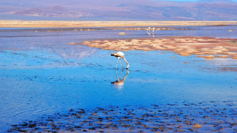 خشک ترین نقطه دنیا (+عکس)