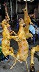 هشدار سازمان بهداشت جهانی: فروش حیوانات وحشی زنده را در بازارهای مواد غذایی متوقف کنید