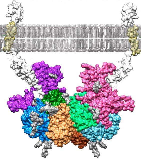 درمان آلزایمر با مهار یک آنزیم