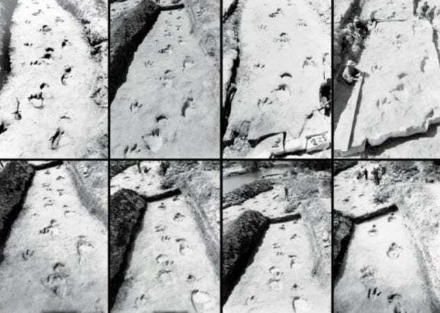 اطلاعاتی جالب درباره 6 فسیل شگفت انگیز از دایناسورها (+عکس)