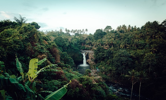 تغییرات آب و هوایی: جنگل آمازون شاید از دوست به دشمن تبدیل شود