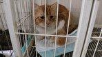 خانهای امن برای حیوانات/ از زنده گیری تا نجات بخشی؛ پانسیون حیواناتی که قرار بود بمیرند (فیلم)