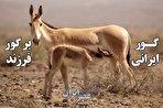 گور ایرانی بر گور فرزند؛ تصاویری اعجابآور از سوگواری یک مادر که تا کنون دیده نشده است (فیلم)