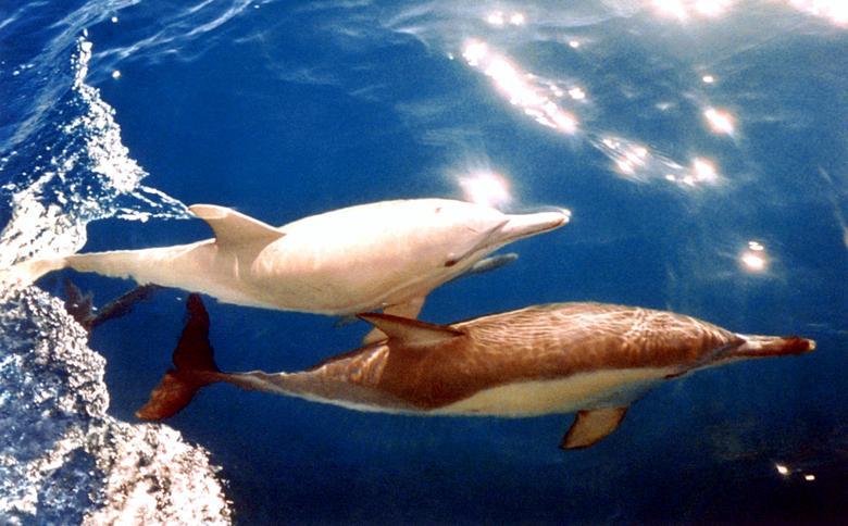 دلفین زال