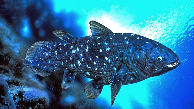زیست شناسی عجیب یک ماهی با عمر یک قرن