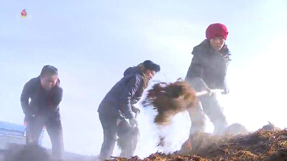 کود پاشی در کره شمالی