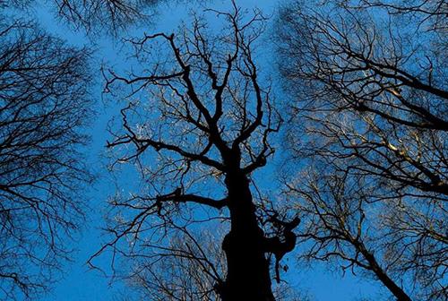 آیا میدانستید که درختان مغز دارند؟ (+عکس)