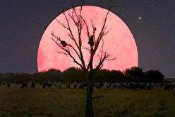 رویت بزرگترین ابرماه سال در آسمان (فیلم)
