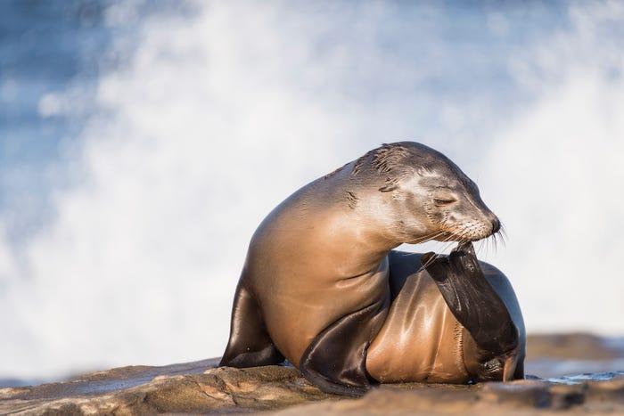 نمایی شگفت انگیز از حیات زیرآبی در مسابقه عکس روز جهانی اقیانوس