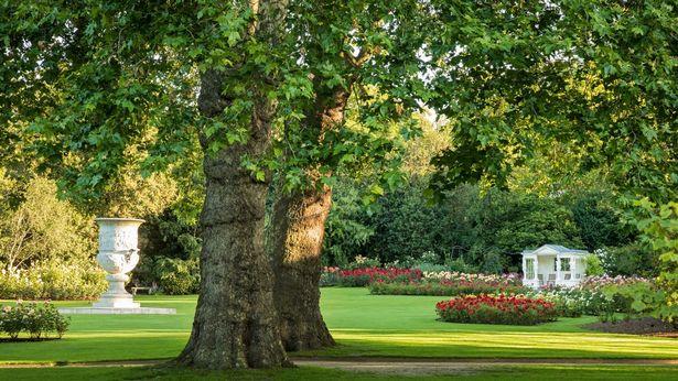 درختان ویکتوریا و آلبرت