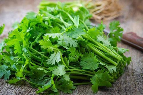 ۱۰ ماده غذایی گیاهی برای بهبود سلامت کلیهها