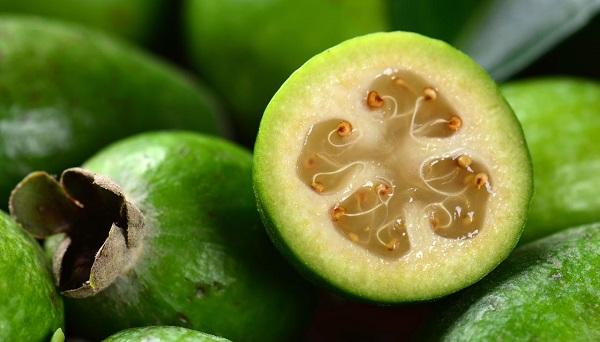 فیجوا؛ انبار ویتامین ث/ از مقابله با عفونت تا تنظیم فشار خون (+عکس)