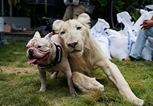 دوستی جالب میان حیوانات در طبیعت (عکس)