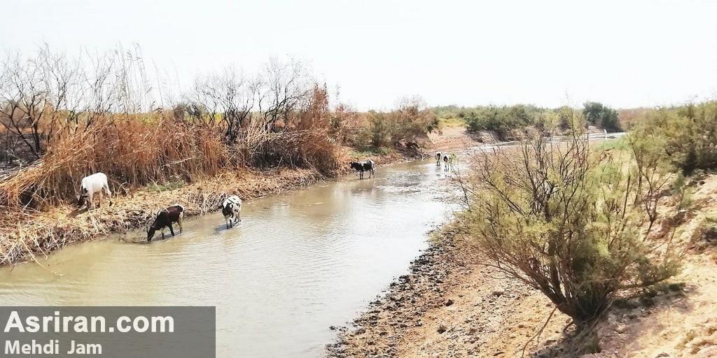 اخطار قطعی برق در روستای بدون امکانات حمیدیه
