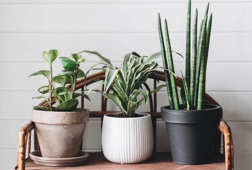 18 گیاه پیشنهادی ناسا برای تصفیه طبیعی هوای داخل ساختمان