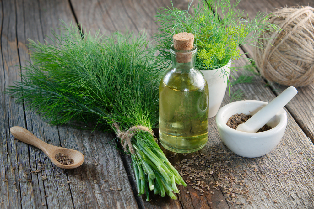 از محتوای تغذیه ای شوید تا مکمل های دارویی این گیاه شگفت انگیز