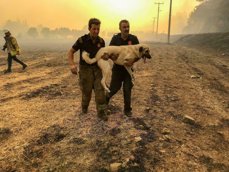 سوختن حیوانات در آتش سوزی ترکیه