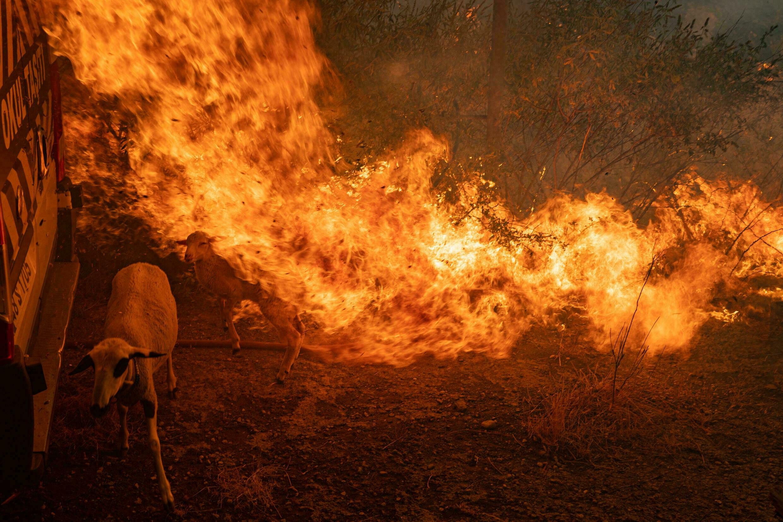 آتشسوزی ترکیه