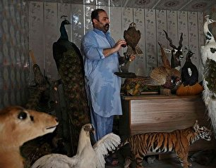 تاکسیدرمی حیوانات خانگی پس از مرگ (عکس)