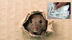 موش ها پس اندازهای مرد کشاورز را خوردند!
