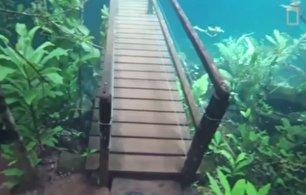 قدم زدن در یک پارک زیر آبی! (فیلم)