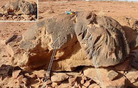 کشف فسیل شتر 8000 ساله در عربستان +عکس)
