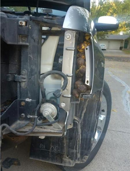 سنجاب بازیگوش، یک ماشین را پر از گردو کرد! (+عکس)