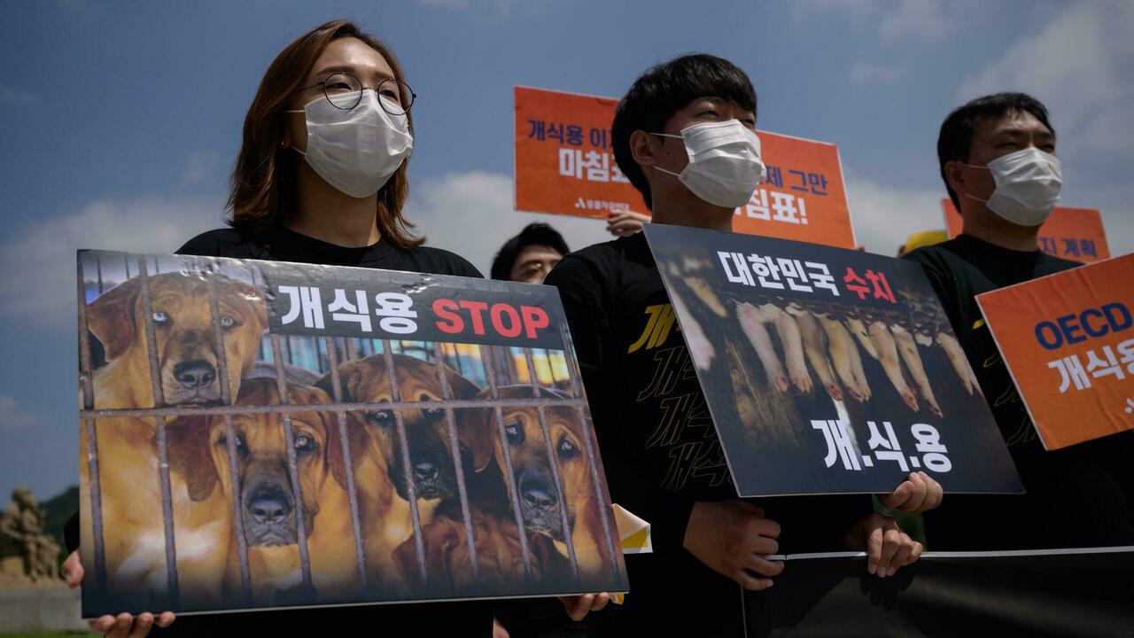 دستور جدید کره جنوبی: خوردن گوشت سگ ممنوع!