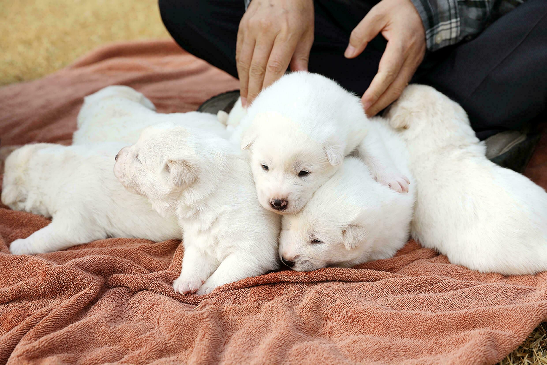 سگ های رئیس جمهور کره جنوبی