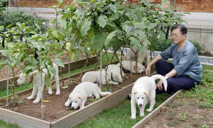 سگ های رئیس جمهور کره جنوبی در کاخ آبی