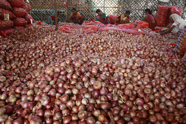کارگران در حال بسته بندی پیاز – الله آباد هند