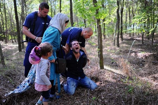 دستگیری خانواده های پناهجوی سوری هنگام ورود از صربستان به داخل محدوده مرزی مجارستان