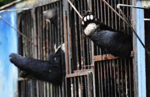 نفوذ امواج سیل به داخل قفس های باغ وحش شهر اوسوریسک روسیه