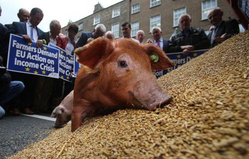 اعتراض کشاورزان غله  به کاهش قیمت ها در مقابل دفتر اتحادیه اروپا در شهر دوبلین ایرلند