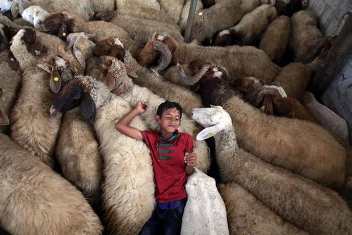 بازی کودک غزه ای در یک آغل