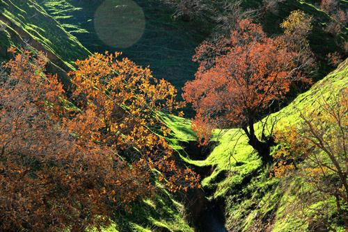 طبیعت ایلام - زیبا نعمتی زاد