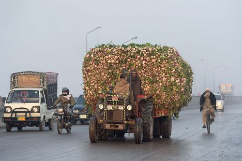 حمل سبزیجات با تراکتور به بازار لاهور پاکستان