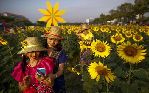 عکس گرفتن در یک مزرعه گل آفتابگردان در شهر بانکوک تایلند