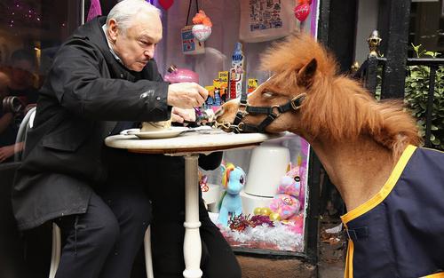 آموزش دادن به کوچک ترین اسب در خدمت نیروهای پلیس شهر نیویورک