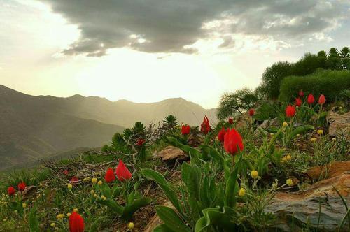 شهرستان بانه- استان کردستان- آزاد