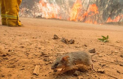 آتش سوزی بزرگ در کوه های سانتا کروز در سانفرانسیسکو - آمریکا - خبرگزاری فرانسه