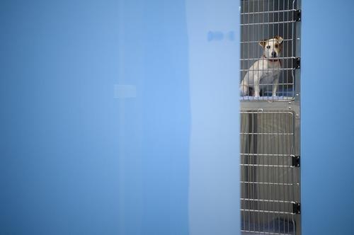 یک سگ در انتظار برای عمل جراحی در بیمارستان جیوانات خانگی در لندن