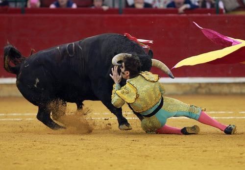 گاو بازی در آراگون اسپانیا