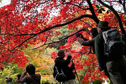 طبیعت پاییزه پارکی در یوکوهاما ژاپن