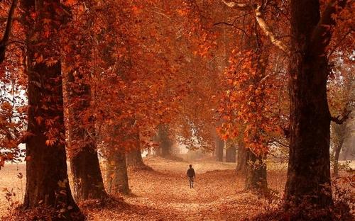 پاییز کشمیر