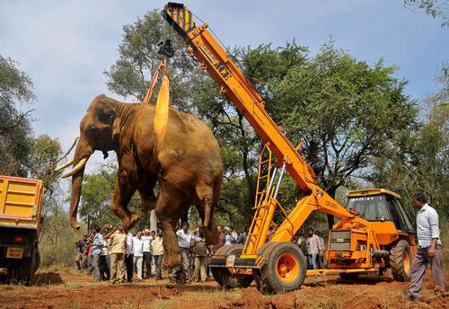 انتقال یک فیل مرده از جنگل – بنگلور هند
