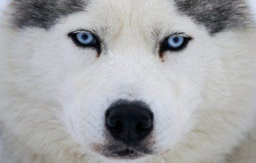 یک سگ