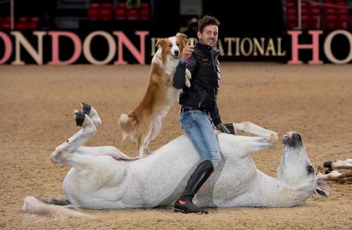 نمایش هنرمند اسب سوار اسپانیایی در نمایشگاه سالانه اسب در لندن