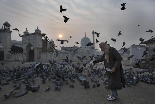 دانه دادن به کبوترها در پگاه صبحگاهی – کشمیر