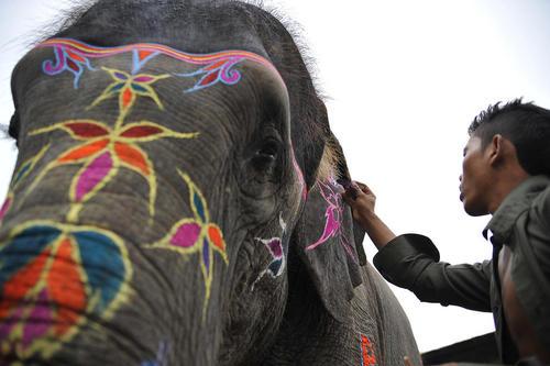 رنگ آمیزی یک فیل 17 ساله برای حضور در جشنواره سالانه انتخاب زیباترین فیل در نپال – کاتماندو